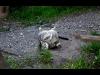 131_wild_cat