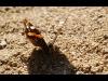 159_butterfly2