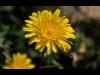 174_flower