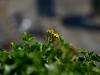 186_flower4