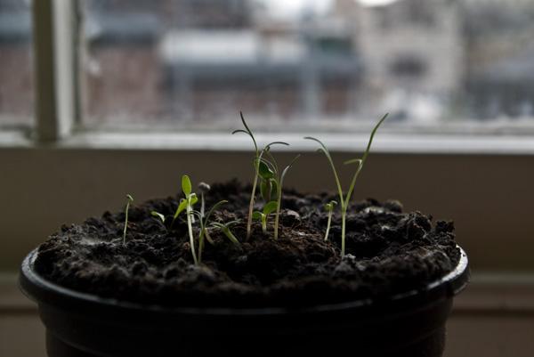 Planted Seedbomb